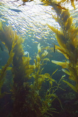 Taking a dive without getting wet (Carbon Arc) Tags: ocean life sea fish aquarium marine underwater birch aquatic creature scripps institution oceanography