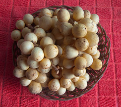 L-Q4-10-05_15h00'52''_[X-fm3977]_HD3_ (fm&hg) Tags: red food brown macro fruits yellow juicy flora asia basket sweet philippines tasty exotic snack round tropical bunch ripe nutritious paleyellow lanzones lansiumdomesticum langsat lansium meliaceae longkong