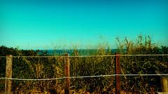 Behind the fence (Inai Mello) Tags: ocean sea brazil plants beach nature leaves fence day rj horizon sunny bluesky niteroi itacoatiara