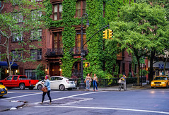 Green New York (Jeffrey Friedkin) Tags: street city nyc newyork building green architecture manhattan ivy streetscene cityscene irvingplace newyorkphoto