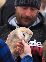 Nibble (M1050017 E-M1 115mm iso200 f4 1_640s -0.3ev) (Mel Stephens) Tags: uk people bird animals festival scotland aberdeenshire olympus owl pro 28 gps f28 q3 omd em1 2015 m43 portsoy 40150mm mirrorless 201507 microfourthirds mc14 mzuiko 20150705