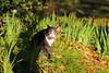 A cat in the shadows (joseluis.cueto) Tags: madrid elretiro parquedeelretiro comunidaddemadrid parques park naturaleza nature fantasticnature gatos cat animales canon canon6d eos 6d 70200 70200f4is