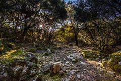 Sottobosco (matta.eu) Tags: villacidro villascema sitzoris cai montagna sottobosco bosco canon sardegna