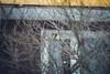 ✖'17 (mrscaramelle) Tags: mrscaramelle outdoor nature manuallens manualfocus manualfocuslens manual january tree trees canon canon60d helios helios402 helios40 гелиос гелиос402 402 bokeh bokehlicious bird birds sparrow outside cold winter snow beautiful riga latvia latvija sovietlens soviet optic