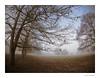 Charlecote Park fisheye trees. (Explored) (tetleyboy) Tags: explored tree fisheye landscape misty foggy winter facebook blue brown frame nationaltrust olympusbodycaplens9mm180 splittoned darktable countryside nature