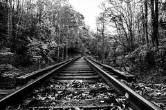 Mini Wheats (feelinviewtiful) Tags: 828 sylva nc mountains black white railroad bridge leaves autum fall