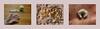 vanilla crescents - as my grandmother taught me Vanillekipferln nach Oma`s Rezept Nachtarbeit  in der Coop Himmelblau Küche - upload Stefanitag Weihnachten Advent (hedbavny) Tags: gabel fork werkzeug besteck vanillacrescents backen vanillekipferl vanille kipferl zucker vanillezucker vanilleschote hand handwerk handarbeit weberhände frauenhände weis white schnee snow sugar gelb yellow orange ebenholz schwarz black braun brown holz wood holzbrett küche kitchen coophimmelblau nachtarbeit palmreading esoterik entlarvung chiromantie handlesen palmistry chirosophie weihnachten advent christmas stefanitag heilig heiligerstephanus stephanstag wien vienna austria österreich hedbavny ingridhedbavny