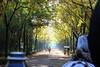 Plaza de Espana (hans pohl) Tags: espagne andalousie séville arbres trees nature cheveaux horses