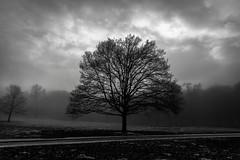 2017-01-02 Ombres et brumes 05 (thierry.lhoest) Tags: soe noir blanc arbre ciel brouillard parc brume black white trees dark sky