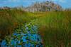 Big Cypress National Preserve, Florida, USA (3) (Jos Buurmans) Tags: bigcypressnationalpreserve everglades fl florida landscape nature northamerica southeast swamp swampland us usa unitedstates unitedstatesofamerica wetland ochopee