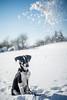 Oh no! Snow! (mripp) Tags: landschaft landscape dog hund animal animals snow scheme winter outside fun playing art kunst color old vintage retro funny lustig sony alpha7rii helios 58mm