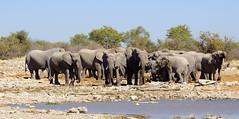 DSC09675 - NAMIBIA 2013 (HerryB) Tags: namibia afrika südafrika südwest afrique africa 2013 sony 77 dslr tamron sigma alpha bechen heribert fotos photos flickr photography herryb heribertbechen reise safari rundreise toyota hilux südwestafrika outdoor aoba etosha lodge onguma wildlife sanctuary schutzgebiet parc park nationalpark