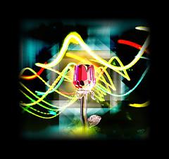 Light (mfuata) Tags: light ışık hayat life gül rose sevgi cam glass