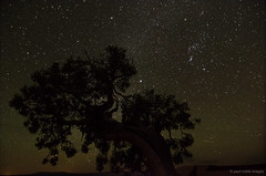 stars over canyonlands (paul noble photography) Tags: nightphotography usa tree stars utah nikon deadhorsepoint canyonlands moab nightsky southernutah freelancephotographer 1224f4 nikond7000 paulnobleimages paulnoblephotography utahskyatdusk