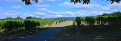 Balade dans le vignoble (Diegojack) Tags: panorama vignes vignoble paysages lavigny lacte
