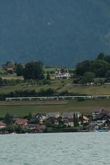 BLS Lötschbergbahn Lötschberger bei Einigen am Thunersee im Berner Oberland im Kanton Bern der Schweiz (chrchr_75) Tags: chriguhurnibluemailch christoph hurni schweiz suisse switzerland svizzera suissa swiss kantonbern chrchr chrchr75 chrigu chriguhurni juli 2015 hurni150725 albumbahnenderschweiz2015712 eisenbahn bahn schweizer bahnen juli2015 albumzzz201507juli thunersee see lac lake lago berner oberland susise kanton bern berneroberland alpensee sø järvi 湖 albumthunersee hochformat albumblslötschbergbahn bls lötschbergbahn train treno zug taggs albumregionthunhochformat thunhochformat susisa