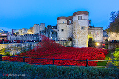 Poppies at the Tower of London (Fabrizio Malisan Photography @fabulouSport) Tags: uk travel flowers red flores london tower castle tourism night britain events blumen visit event poppy poppies londres soldiers british remembranceday remembrance fiori turismo viaggi londra rossi toweroflondon papaveri voyages fleures commemoration poppiesatthetower poppiesatthetoweroflondon remembranceday2014