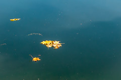 Floating or flying- (FloreB.) Tags: feuilles rivière bleu jaune flottant volant leaves blue river yellow floating flying outside countryside peaceful