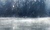 Steamy water (VandenBerge Photography) Tags: water river nature bird trees fog mist reflection mono canon winter waterscape aare gulls frost light thun switzerland