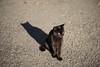 猫 (23fumi) Tags: ilce7m2 sony a7ⅱ 85mm ef85mmf18usm cat canon mc11 sigma bokeh dof animal 猫 ねこ ソニー キヤノン シグマ