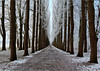 the way (Gabi Wi) Tags: winter schnee allee weg passanten weite bank bäume weis braun frost evenburgallee
