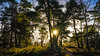 January star (TanzPanorama) Tags: nature forest woods woodland sunlight sunstar tanzpanorama sonya7ii fe1635mmf4zaoss sel1635z variotessartfe1635mmf4zaoss england surrey addington seasons january tree sony backlit landscape