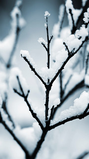 小雪 画像27