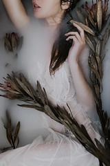 Milkweeds (Corinne Alexandra) Tags: milkbath ethereal moody creepy protea haunting