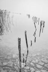 (Mat-S) Tags: piquets stacks barroères barrières balckandwhite noiretblanc minimalism mist brume brouillard roseaux reed