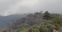 Liguria, colori del bosco in una giornata senza sole (explored) (Carla@) Tags: nature landscape liguria italia europa explorenaturethewildnature supershot thesunshinegroup coth alittlebeauty mfcc canon coth5 sunrays5