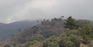Liguria, colori del bosco in una giornata senza sole (explored)