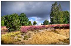 Biotop für Reptilien & Insekten (Don111 Spangemacher) Tags: heide himmel heidekreis heideblüte landschaft lüneburgerheide niedersachsen naturschutzgebiet natur naturpark niederhaverbeck bunt bispingen blüte sommer erika unwetter reisen