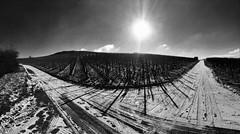 Winter im Weinberg (olipennell) Tags: winter snow vineyard weinberg neckarsulm germany monochrome blackwhite schwarzweis stiftsberg schnee iphone landscape landschaft