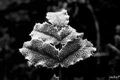 Early morning (Pierrot 49) Tags: nature leave noiretblanc nikonflickraward blackandwhiteonly blackandwhite monochrome