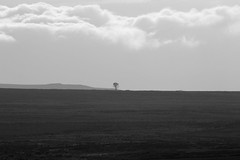 Hanging Tree (Gazasal) Tags: gazasal tree hanging dava moor black white horizon clouds scotland