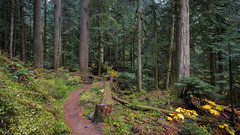 Some Fall For You (John Westrock) Tags: forest nature trail trees deceptionfalls pacificnorthwest washington path canoneos5dmarkiii canonef1635mmf4lis