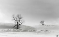 In Search of Winterscape (A.Reef (slow)) Tags: winterscape cold landscape winter monochrome elitegalleryaoi bestcapturesaoi ruby10 ruby15 ruby20