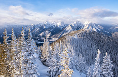 Frosted Pines on the Summit (Kristin Repsher) Tags: alberta banff banffgondola banffnationalpark canada canadianrockies d750 nikon pinetrees rockies rockymountains snow sulphurmountain winter