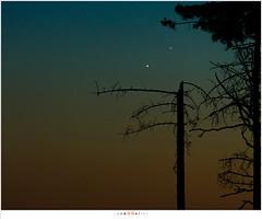 Venus en Jupiter (nandOOnline) Tags: twilight bomen venus nederland astro boom jupiter avond hemel landschap schemering strabrechtseheide planeten astronomie helmond avondrood samenstand nbrabant conjunctie strabrecht astrofotografie sterrenkunde silhouetnatuur