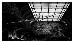 Pterodactylus (leo.roos) Tags: paris dinosaur bones cz skeletons a7 parijs dinosaurus jardindesplantes nationalmuseumofnaturalhistory pterosaur botten pterodactylus musumnationaldhistoirenaturelle darosa skeletten dyxummeet galleryofpalaeontologyandcomparativeanatomy galeriedepalontologieetdanatomiecompare leoroos june2015 pterodactylusantiquus sonycarlzeissvariosonnar247028