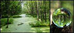 Le marais (The marsh) (Joanne Levesque) Tags: trees summer green collage landscape diptych montreal vert arbres marsh été paysage tamron diptyque marais glassball nikond90 18270mm parcpointeauxprairies globedeverre