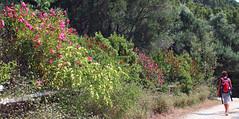 Parco regionale del Monte Conero (Risorse Cooperativa) Tags: parco tourism fauna trekking flora mare natura monte conero active adriatico arrampicata naturale escursionismo risorse