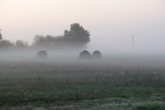 "Misty Morning • <a style=""font-size:0.8em;"" href=""http://www.flickr.com/photos/133405556@N08/20052702246/"" target=""_blank"">View on Flickr</a>"