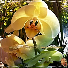 ♔♥♔HAPPY NEW YEAR MY DEAR FRIENDS♔♥♔♥  I WISH Y0U ALL THE BEST FR0M 2017 ♥HUGGSS ♥KISSESS♥♥ (♛♥♥HULYA ♥♥♛IN H0LIDAY-HAPPY 2017) Tags: orchids orkide flowers nature screamofthephotographer hulyaicoskun hulyacoskunphotography newyear 2017 happynewyear peace world style culture flickr naturephotos prettynaturephotos hulyaprettygallerie