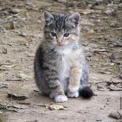 La piccola Meg - The little Meg (Marco Ottaviani on/off) Tags: animali animals felini gatto soriano cat meg canon marcoottaviani