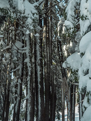 PC030439-1 (Camera Bread) Tags: olympus olympusomdem5 omdem5 omd em5 olympusem5 craterlake craterlakenationalpark snow snowshoe snowshoeing winter wintertime winterhiking hikinginwinter oregon