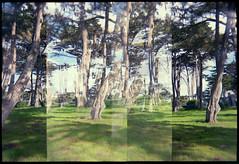 PacificGrove (alisanewhouse) Tags: holga incamera film trees landscape pacificgrove