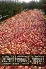 American apple growers are at a disadvantage because of language. In Chinese, an apple is ping guo. Peace is ping an (two words, both meaning peace) so silent night=ping an ye and netizens send pictures of apples with wishes. In China, friends wishing to (Bruce Moon) Tags: december 24 2016 0831am american apple growers disadvantage because language in chinese an is ping guo peace two words both meaning silent nightping ye netizens send pictures apples with wishes china friends wishing follow western holiday may give