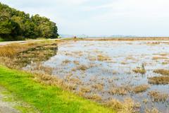 China Camp King Tides Project (MarinSD) Tags: kingtides tides hightide hightides chinacamp california nature