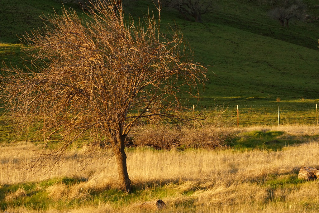 2017-01-27 Contra Loma Regional Park - Take 4 [#2]